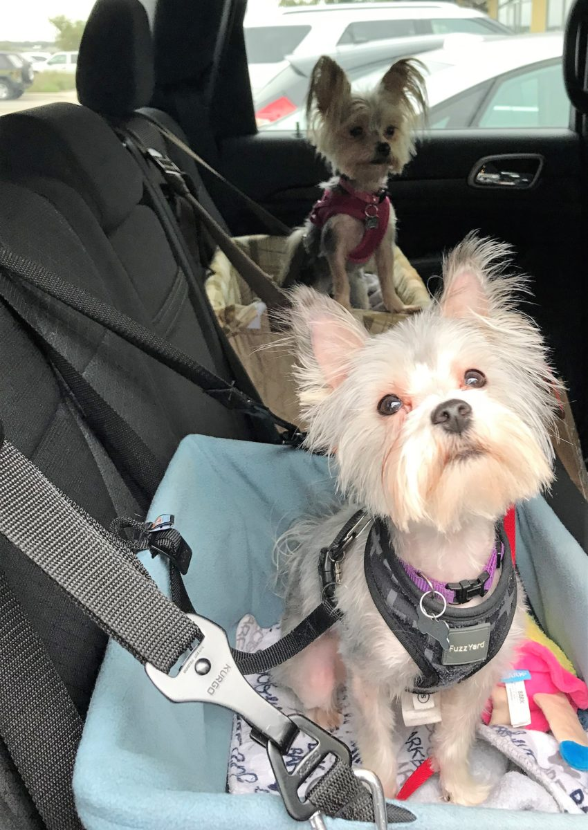 Pet Friendly Travel Tips and Ideas